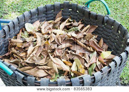 Dry Leaves In The Bin