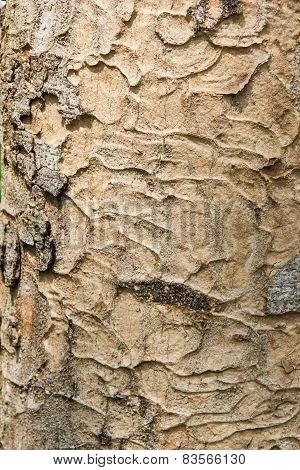 Bark Hard Wood Texture Natural Background