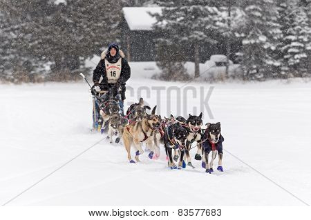 Beargrease 2015 Marathon Erin Altemus Leaving Trail Center