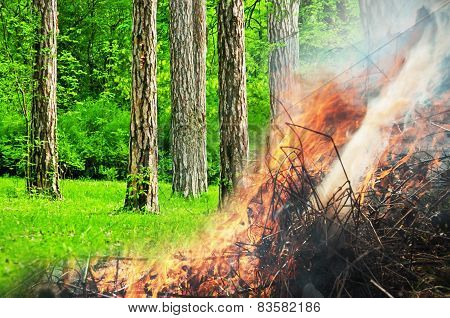 Burning green forest collage