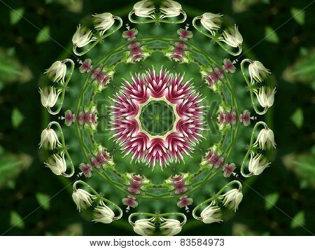 Flower kaleidoscope.