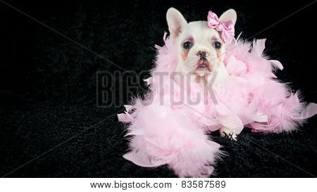 Made - Up French Bulldog Puppy