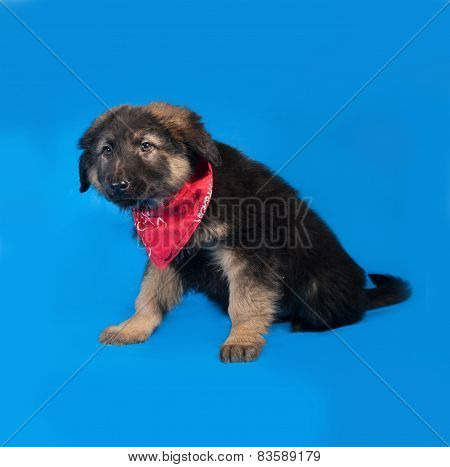 Black And Red Shaggy Puppy In Red Bandanna Sitting On Blue