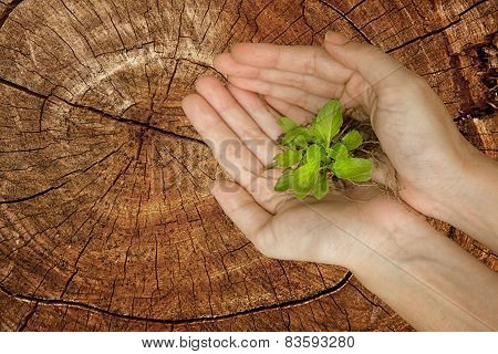 Hands Holding Green Plant On Stump Tree, Ecology Concept