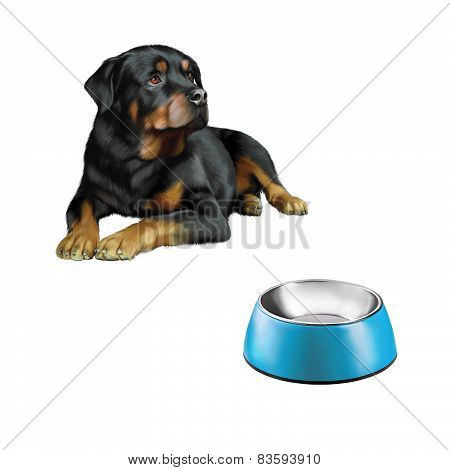 Rottweiler in front, Blue Pet bowl isolated on the white background
