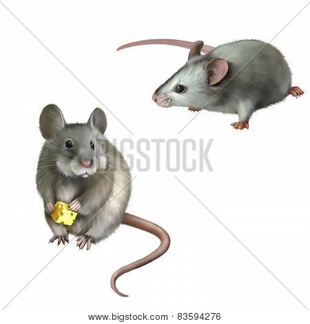 cute white mouse holding cheese on white background