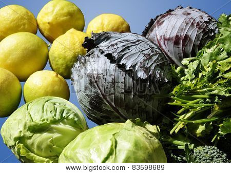 Fresh vegetables for a healthy diet