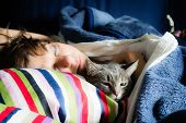 image of domestic cat  - Domestic cat lying on bed with sleeping woman - JPG