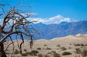 image of arid  - the hottest arid desert in the USA - JPG