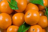 image of clementine-orange  - close up of fresh clementines with green leaves - JPG