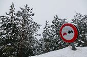 picture of snowy-road  - No Overtaking Sign in a Snowy Road - JPG