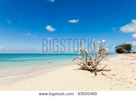 Dry Tree Branch Laying On The Beach