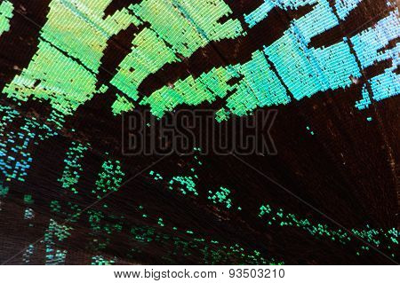 Green Butterfly Wing