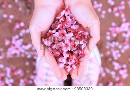 Cherry blossom petals on the ground