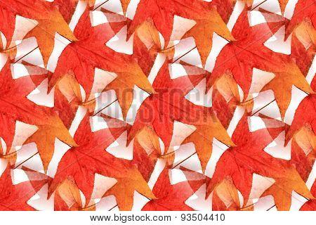 Seamless Maple Leaf Design 2
