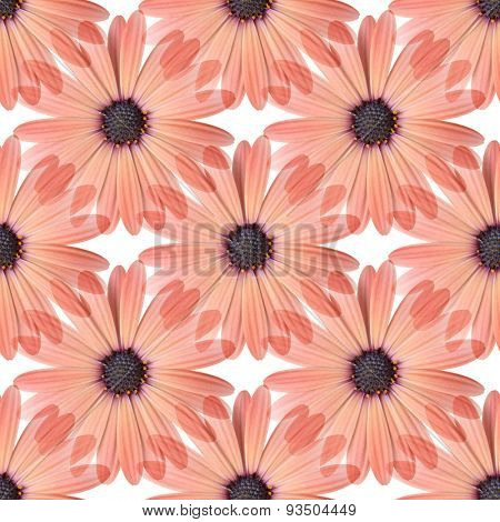 Seamless Peach Daisy Design 1
