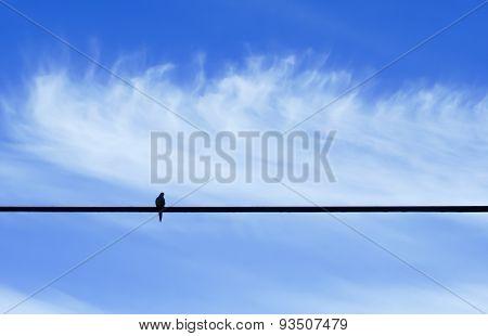 A bird on power line