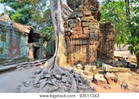 Ta Prohm Temple In Angkor Wat