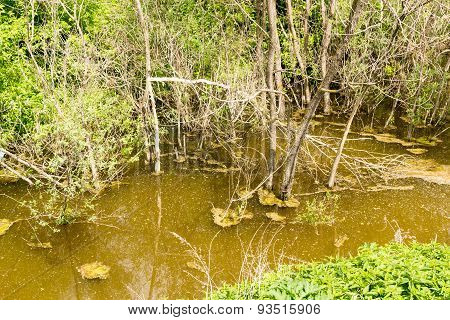 Dirty Swamp Water In A Lagoon