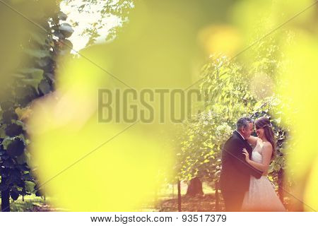 Bride And Groom Photographer Through Autumn Leaves