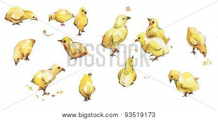 Set Of Watercolor Bird Baby Chickens