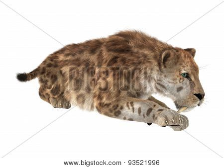 Big Cat Sabertooth
