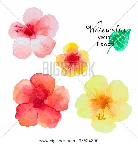 Set Of Watercolor Hibiscus Flowers.