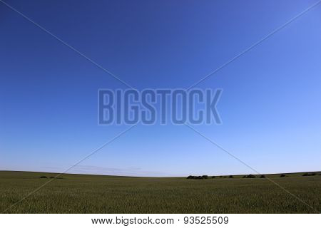 Blue Sky And Field