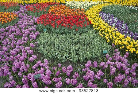 Colorful tulip flower bed