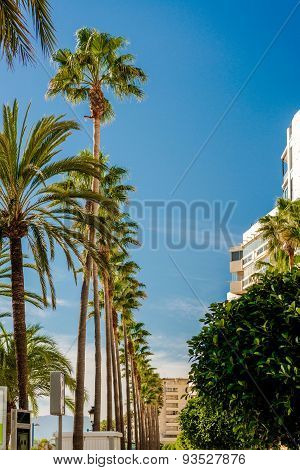 Palm Trees In A Row Against Blue Sky Background