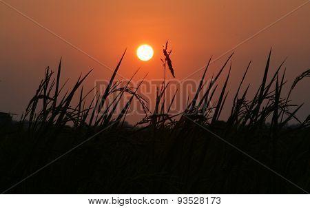 grass flower and the sun