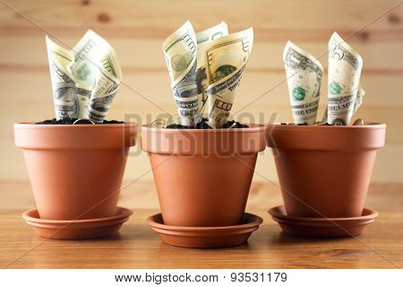 Growing money in flowerpots on wooden background