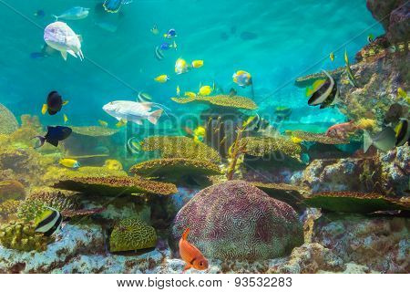 tropical fishes at Rayong aquarium, Thailand