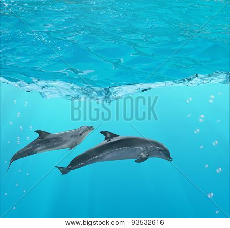 two dolphins under blue water with bubbles