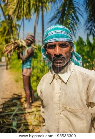 HAMPI, INDIA - 28 JANUARY 2015: Portrait of Indian worker with second worker loading sugarcane on truck