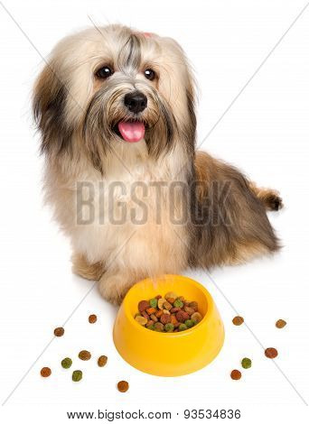 Happy Havanese Puppy Is Sitting Next To Her Favorite Dry Food