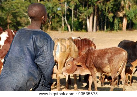 The Guardian Of Cows - Village Of Pomerini - Tanzania - Africa