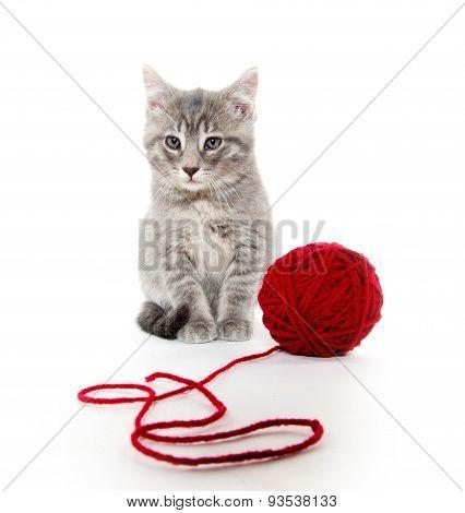 Cute Gray Tabby Kitten With Red Yarn