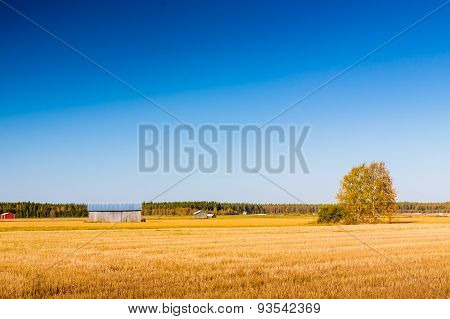 Clear Autumn Sky On The Fields