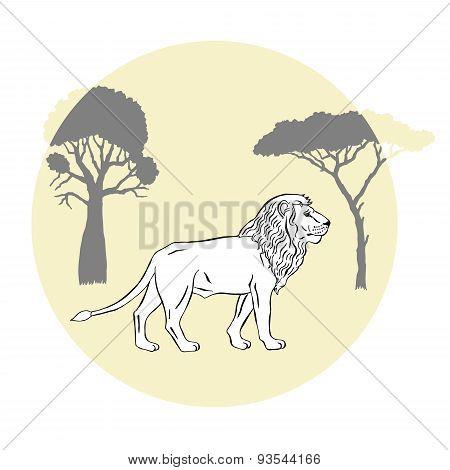 Lion between savanna trees