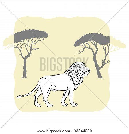 Lion between savannah trees