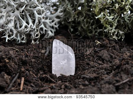 Rock Crystal On Forest Floor