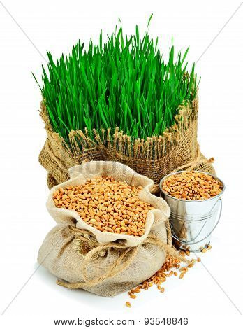 Wheat Grass, Whet Grains In The Sack Isolated On White