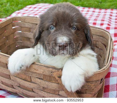 Picnic Puppy