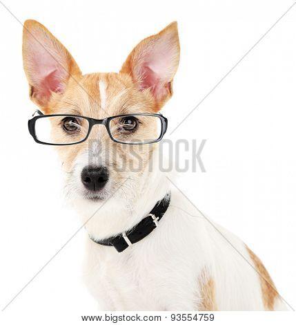 Cute dog with eyeglasses isolated on white