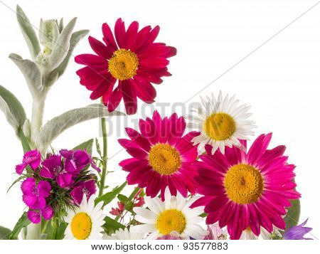 Colorful Cheerful Bunch