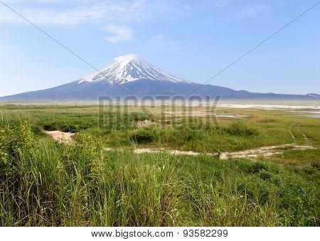 Mount Fuji And Green Meadows.