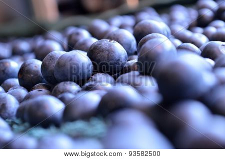 Blueberries Out To Dry