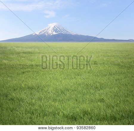 Mount Fuji And Green Rice Fields.