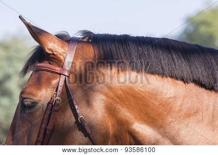Horse Head NeckDetail